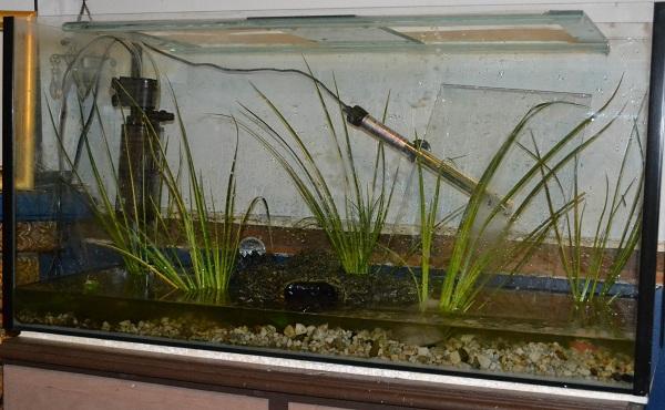 Drained Aquarium